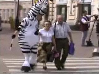 На улицы Нижнего вышел гаишник, нарядившийся зеброй